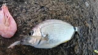 Рыбалка в Сочи с волнореза на креветку разнорыбье