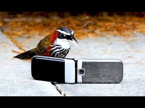 Coole Videos #366: Der Vogel und das Handy / Bird Talks To Phone || ✪ Stern DuTube