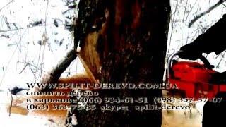 как спилить дерево целиком самому(как спилить дерево целиком? это видео поможет вам Оказываем услуги в г. Харьков и Харьковской области удале..., 2015-01-04T14:53:47.000Z)