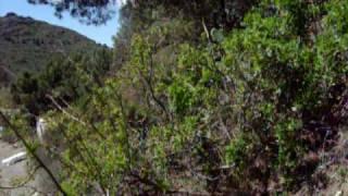 Коста Брава, Бухта отдыха 5(, 2009-04-19T11:28:22.000Z)