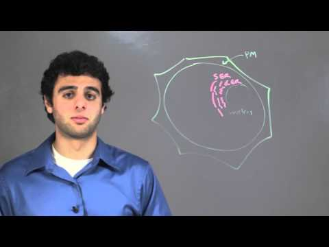Anatomy of Plant Cells : Biology & DNA