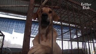 Saving Dogs From A Dog Factory | Kritter Klub