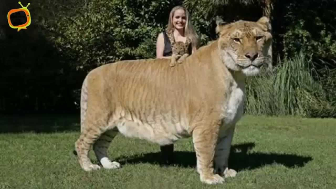 50 biggest animal ever in the world youtube