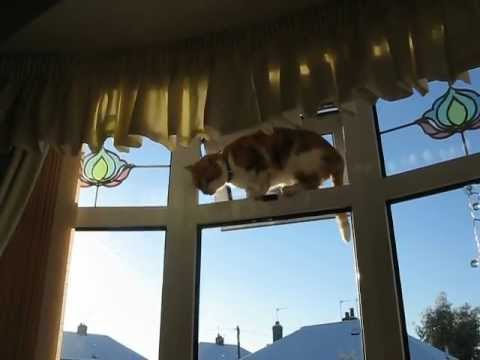 Funny meowing cat jumps up and through a high window!