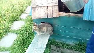 Кот в воде)