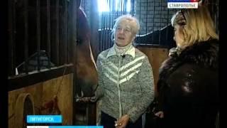 Лошади не любят ленивых
