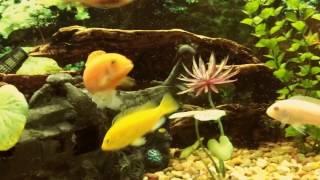 �������� ���� FISH DANCING ������