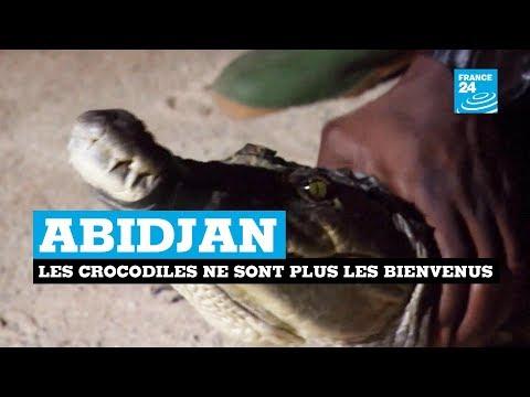 Abidjan : les crocodiles ne sont plus les bienvenus thumbnail