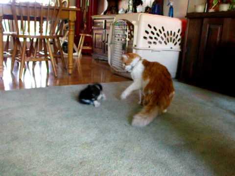 cat behaviour body language
