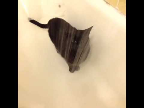Our famous Vine video of Sadie the Shower Cat