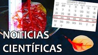espinacas convertidas en clulas del corazn   noticias 27 3 2017