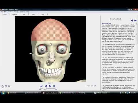 Cabeza y cuello software interactivo - YouTube