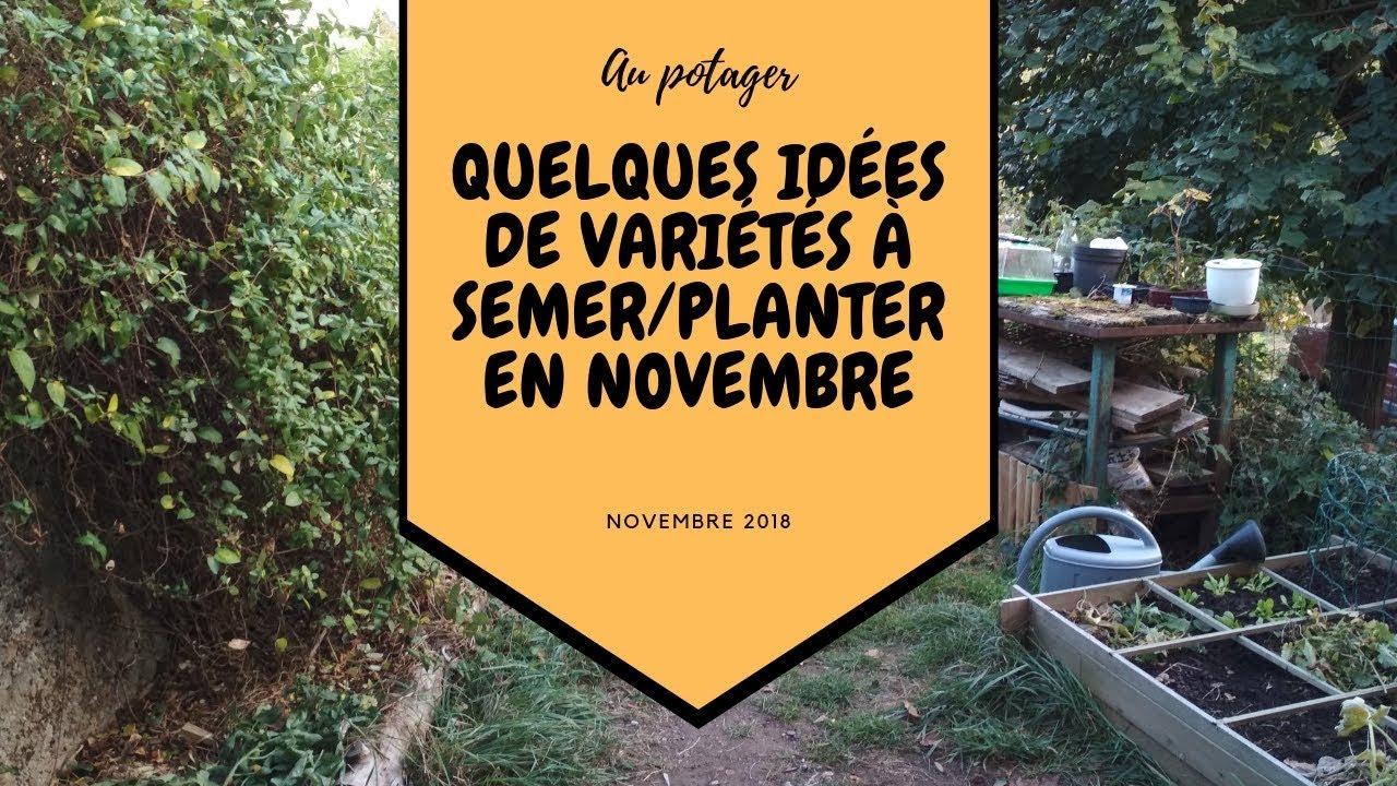 Quelques idées de variétés à semer/planter en novembre au ...
