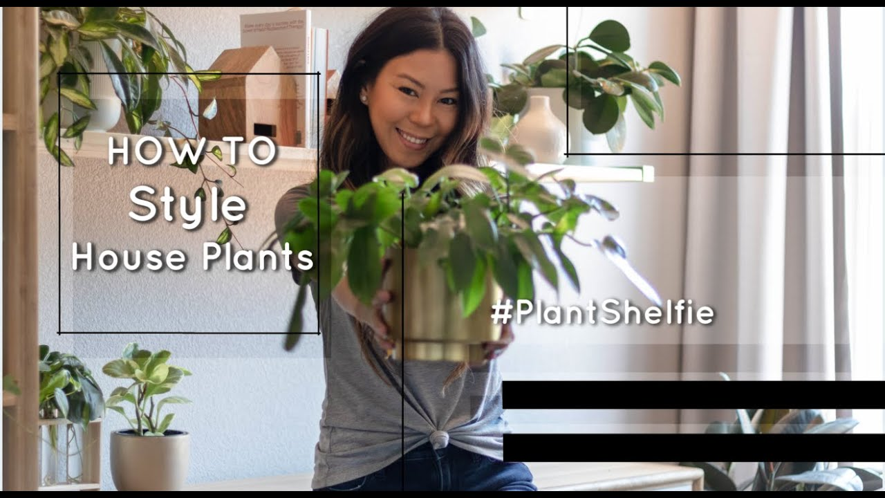 How To Style House Plants