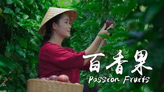 「One Fruit for a Table」Herbalist of Fruits--Passion Fruits
