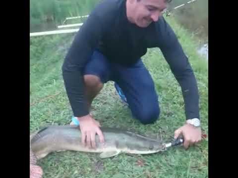 Pescaria em pesque pague Mutuípe(1)
