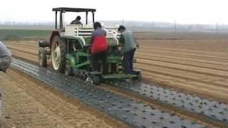 Repeat youtube video Biotelo pacciamatura su insalata serra e pieno campo.