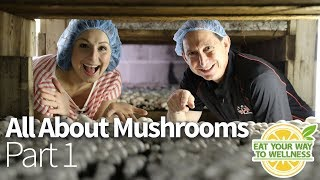 Where Do Mushrooms Come From!? Here is the answer!