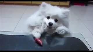 Funny Dogs Compilation #3 - Amazing Animals