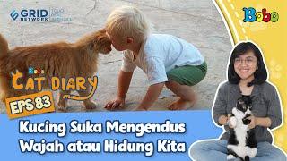 Diary Kucing - Alasan Kucing Suka Mengendus Wajah atau Hidung - Eps 83