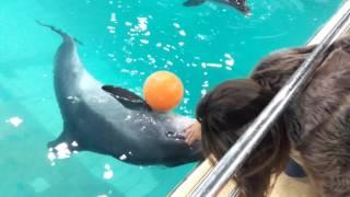 Дельфины в ярославском дельфинарии(, 2016-02-24T05:38:31.000Z)