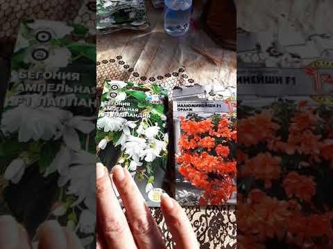 Ампельная Бегония из семян Часть 1 Продолжение ролика смотрите в описании