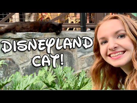Disneyland Cat & Dinner at Tangaroa Terrace, Disneyland Hotel! Disneyland Vlog 2019 from YouTube · Duration:  5 minutes 28 seconds