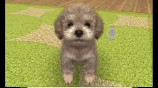 Nintendogs plus Cats Toy Poodle and New Friends Gameplay {Nintendo 3DS} {60 FPS} {1080p} Top Screen