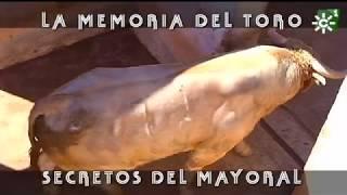 Embarque de los Ronceles para Arnedo: secretos del mayoral   Toros desde Andalucía