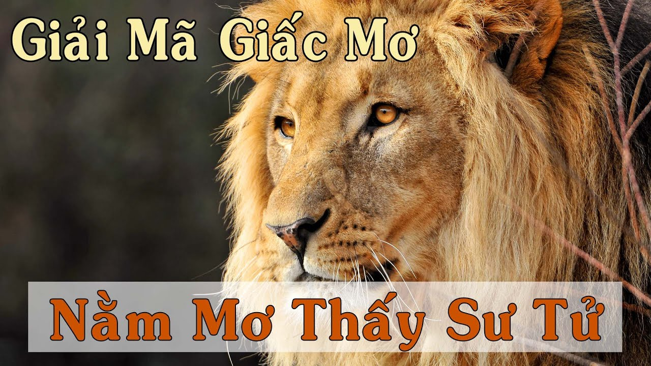 Giải Mã Giấc Mơ : Nằm mơ thấy sư tử là điềm báo gì - Đánh đề con nào? - YouTube