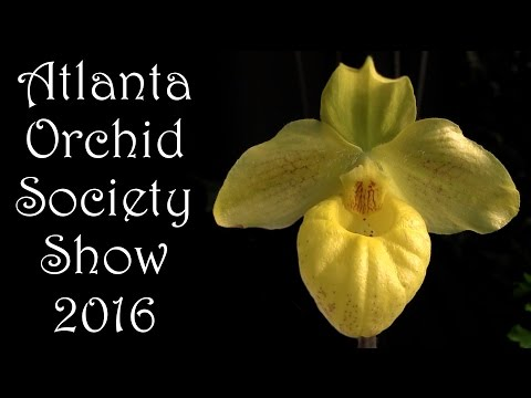 Atlanta Orchid Society Show & Sale • March 2016