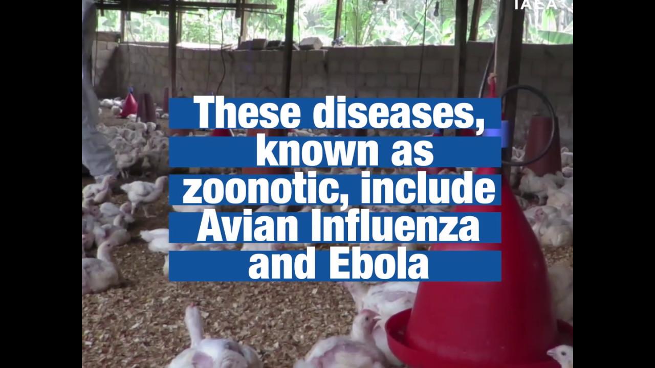 Vets in Africa help prevent spread of zoonotic diseases