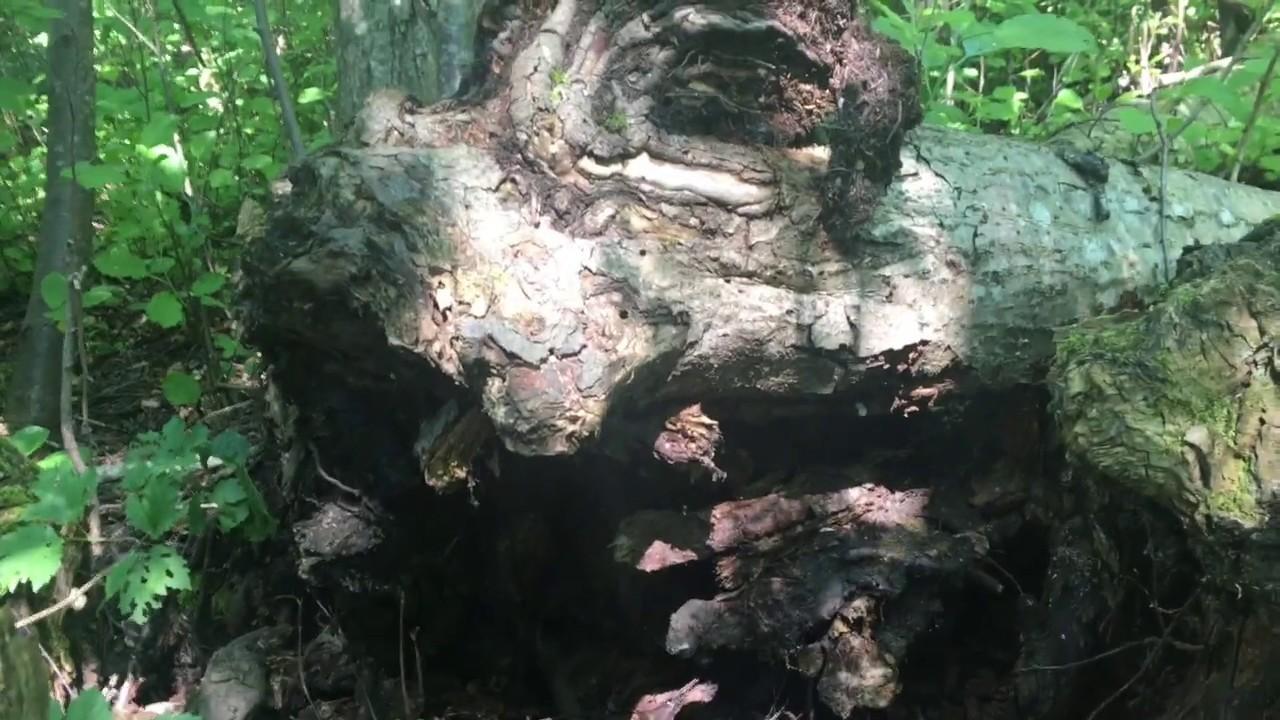 Filosofía en el bosque 21. Los qualia.