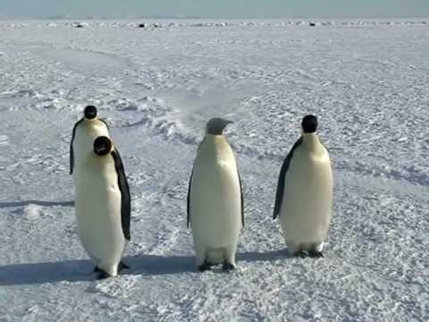 Close Encounters of the Emperor Penguin Kind