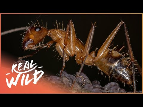 Swarms Of Bugs, Insects and Creepy Crawlies | Real Wild