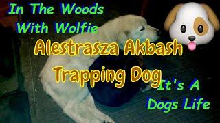 Alexstrasza Akbash The Trapper Dog