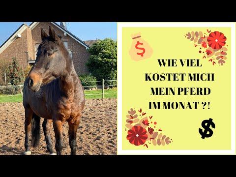 ⚜️WIE VIEL KOSTET MICH MEIN PFERD IM MONAT ?! ⚜️| Finanzen rund ums eigene Pferd | GOLDEN SORAYA ⚜️