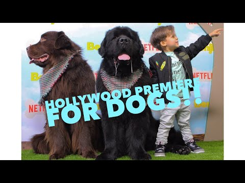 A Hollywood Premier, FOR DOGS!!! Check our night out at the Netflix Premiere for Benji.