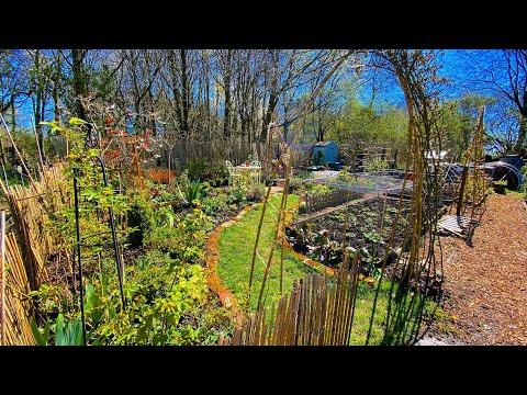 Allotment Vegetable Garden Spring Update Part 1