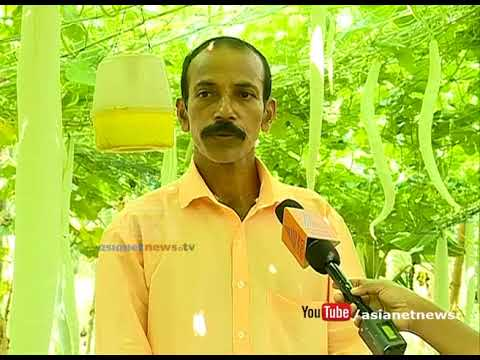 Nellinad's Vegetable Farms Getting Ready For Onam Harvest
