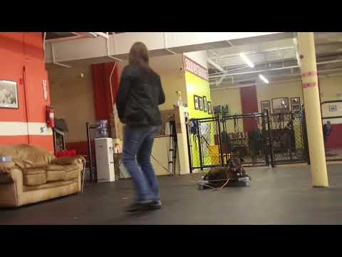 Dog Training | Shadow student working with board and train dog | Solid K9 Training Dog Training