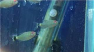 Fish Tanks & Aquarium Maintenance : How To Remove Calcium Buildup From A Plastic Aquarium
