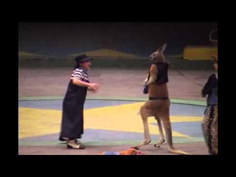 Kangaroo Boxing (2001)