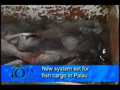 New System Set For Fish Cargo In Palau