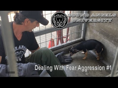 Dealing with Fear Aggression part 1 -Bound Angels University
