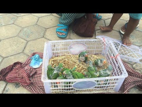 Releasing Parrots Back To The Wild
