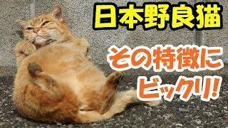 チャンネル登録はこちら⇒https://goo.gl/P9h2LZ 海外の反応「日本の野良...