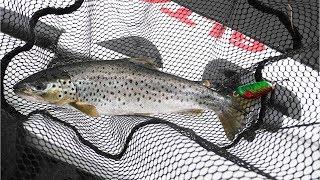 Поиск и ловля кумжи на Ловозере Рыбалка на Кольском полуострове