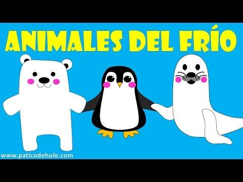 los-animales-polares---sonidos-de-animales