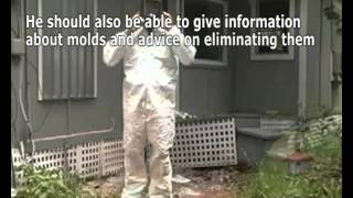 Finding the Best Mold Remediator